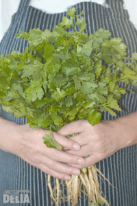A pair of hands holding a big bunch of fresh coriander