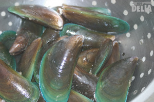 Live green-lip mussels in a steel colander