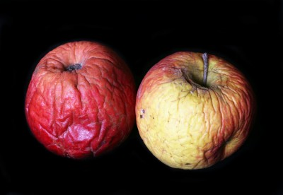 A pair of rotten apples